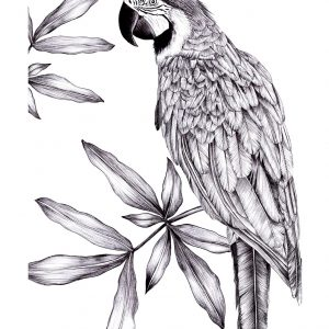 Dominican Macaw Art Print
